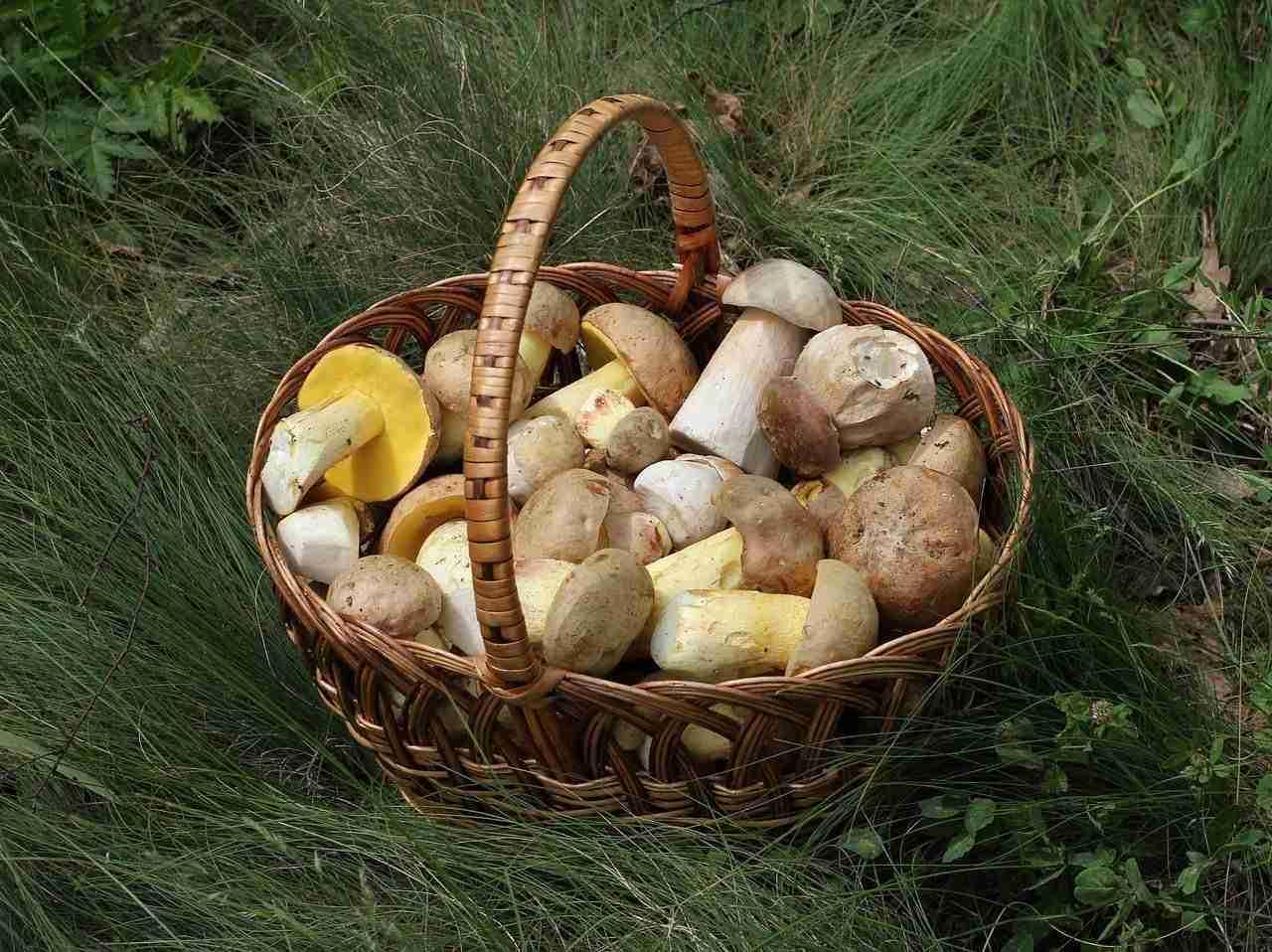 Tagliatelle con funghi porcini e ricotta