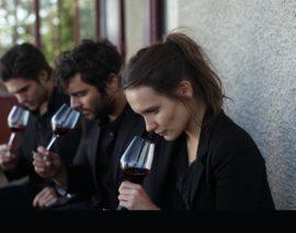 Quando fare il vino è un bel film