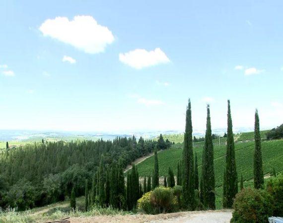 Toscana un continente del vino