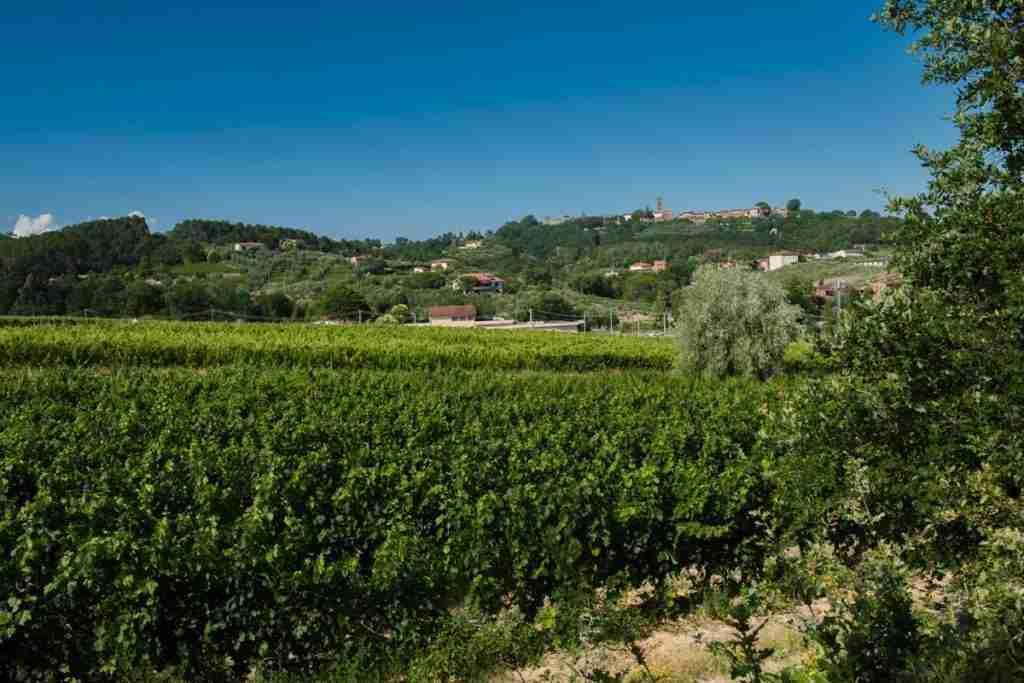 Le vigne di Tenuta Buonamico 2020 RM